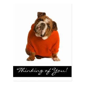 Thinking of You Bulldog Puppy Dog Greeting Poscard Postcards