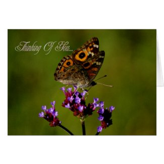 Thinking Of You. Butterfly Condolences Sympathy Greeting Cards