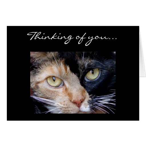 Thinking of you Calico cat greeting card