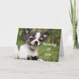 Thinking Of You Chihuahua Card