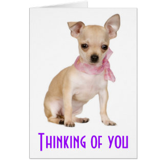 Thinking of You Chihuahua Puppy Dog Greeting Card