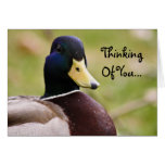 Thinking Of You Duck Card