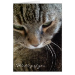 Thinking of You Funny Tabby Cat Card
