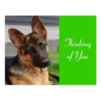 Thinking of You German Shepherd Puppy Dog Postcard