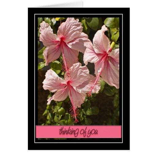 Thinking of You Hibiscus Card