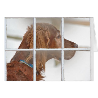 thinking of you-Irish Setter in snow Card