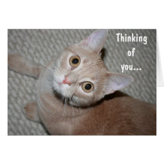 Thinking of You Kitten Stationery Note Card