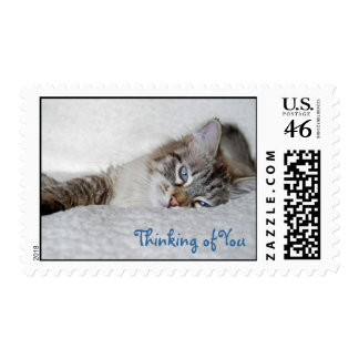 Thinking of You Kitty Stamps