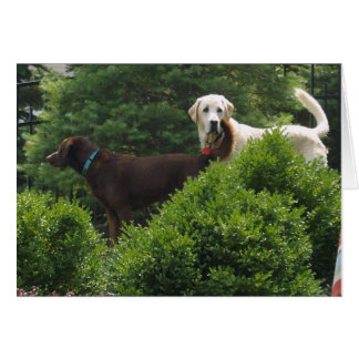"""Thinking of you  """"Labradors"""" Stationery Note Card"""
