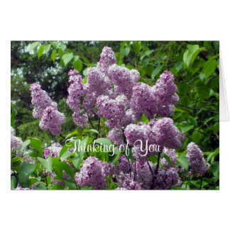 Thinking of You-Lilac Bush Cards