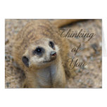Thinking Of You Meerkat Greeting Card