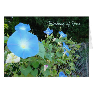 Thinking of You...Morning Glories Notecard Stationery Note Card