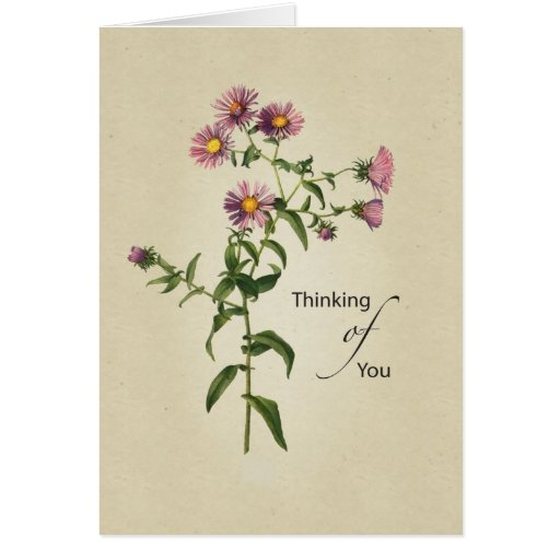 Thinking of You, Natural Pink Aster Greeting Cards