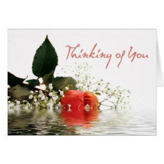 Thinking of You Orange Rose Greeting Cards