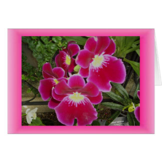 Thinking of You, Orchids Card