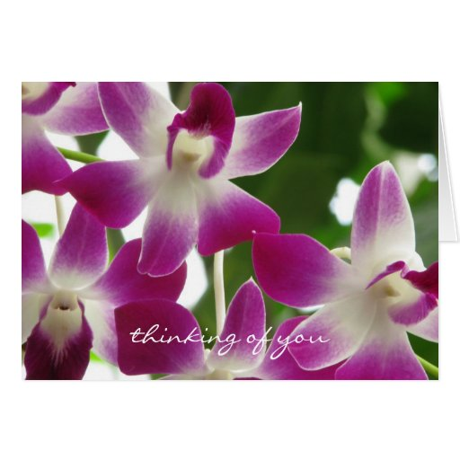 Thinking of You ~ Orchids ~Get Well Soon Card Greeting Card