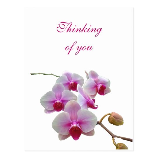 Thinking of You Orchids - Phalaenopsis Postcard