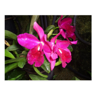 Thinking of You Orchids Postcard
