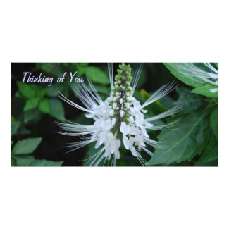 Thinking of You Picture Card