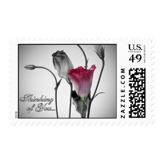 Thinking of You - Pink Rose Postage Stamps