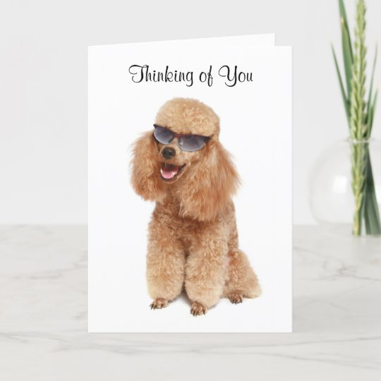 Thinking of you poodle greeting card verse zazzle thinking of you poodle greeting card verse m4hsunfo
