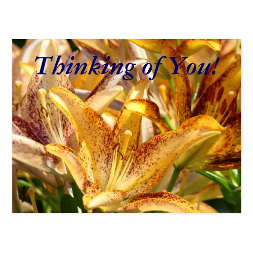 Thinking of You! postcard Orange Lily Flowers
