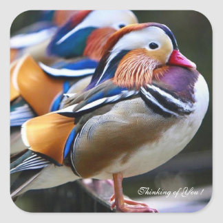 Thinking of You ! Pretty Mandarin Ducks Square Sticker