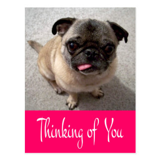 Thinking of You Pug Puppy Dog Greeting Post Card