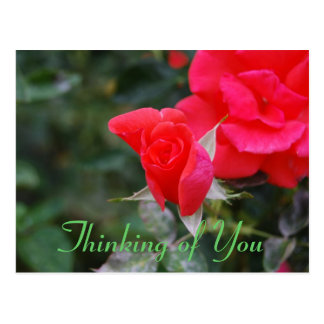 Thinking of You Red Rose Bud Postcard
