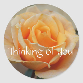 Thinking of you, rose in peach round sticker