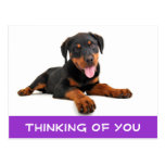 Thinking of You Rottweiler Puppy Dog Postcard