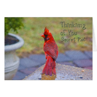 Thinking of You - Secret Pal -  Red Cardinal Card