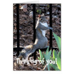 Thinking of you! Squirrel Card