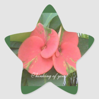 Thinking of you ! Star Sticker