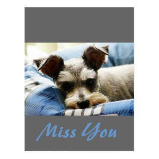 Thinking of You, sweet Mini Schnauzer Postcards