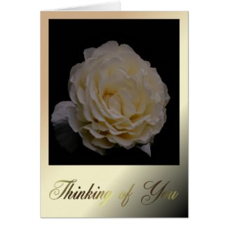 Thinking Of You. White Rose. Sympathy Grief flower Greeting Card