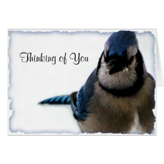 Thinking of You - Winter Blue Jay Series Card