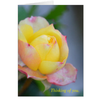 Thinking of you. Yellow rose. Note or greeting. Card