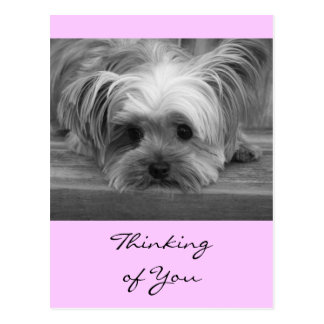 Thinking of You Yorkshire Terrier Puppy  Post Card