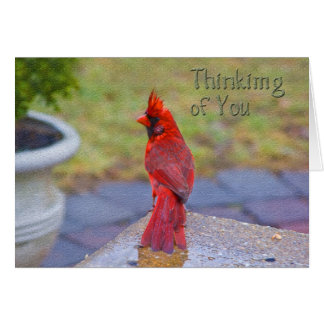 Thinking of Yoy - Red Cardinal in Rain Card