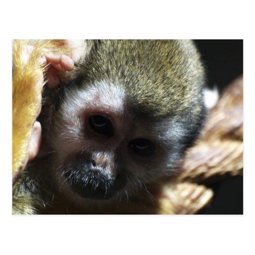 """Thinking..."" Squirrel Monkey Gifts Postcard"