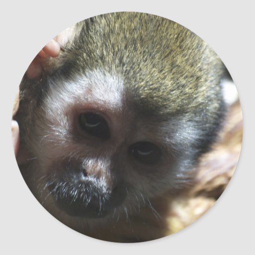 """""""Thinking..."""" Squirrel Monkey Gifts Stickers"""
