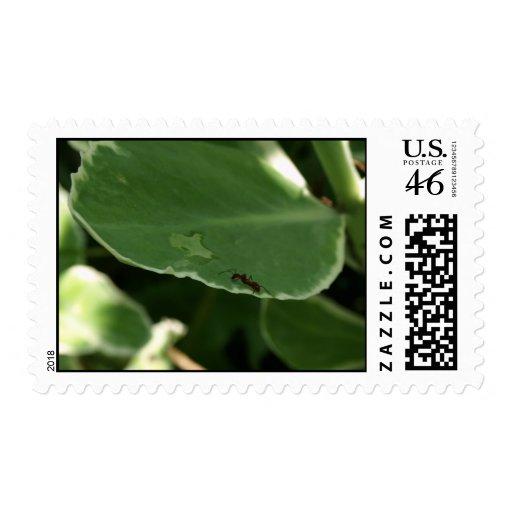 Thirsty Ant Stamp