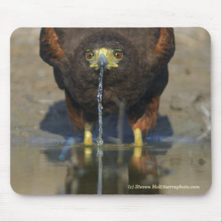 Thirsty Harris Hawk Mouse Pad