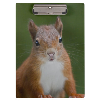 Thirsty Squirrel Clipboard