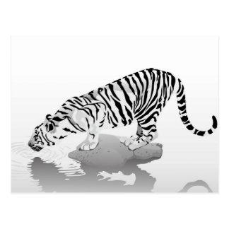 THIRSTY TIGER POSTCARD