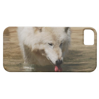 Thirsty Wolf iPhone 5 Cases