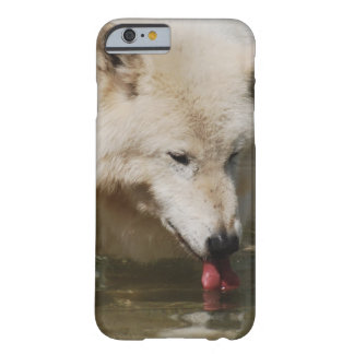 Thirsty Wolf Barely There iPhone 6 Case