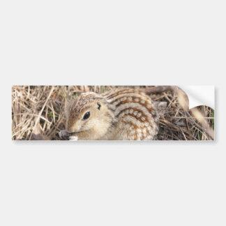 Thirteen Lined Ground squirrel Car Bumper Sticker