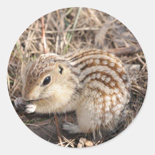Thirteen Lined Ground squirrel Classic Round Sticker